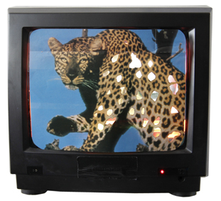AO Hirsch_Leopard TV_small