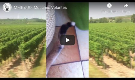 mme_duo_youtube_mouches_volantes